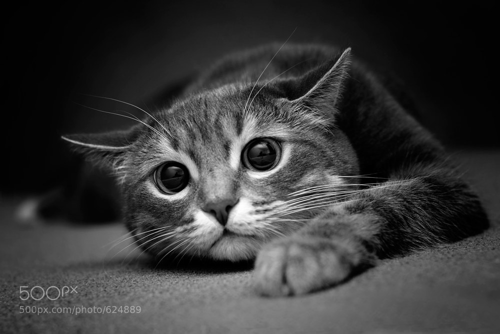 Photograph the look by Павел Хлыпенко on 500px