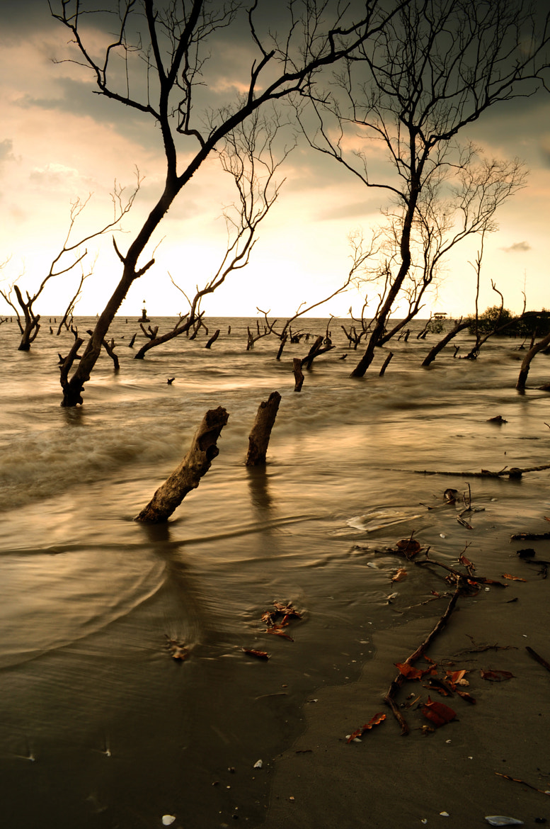 Photograph Tanjung Sepat by Grey Chow  on 500px