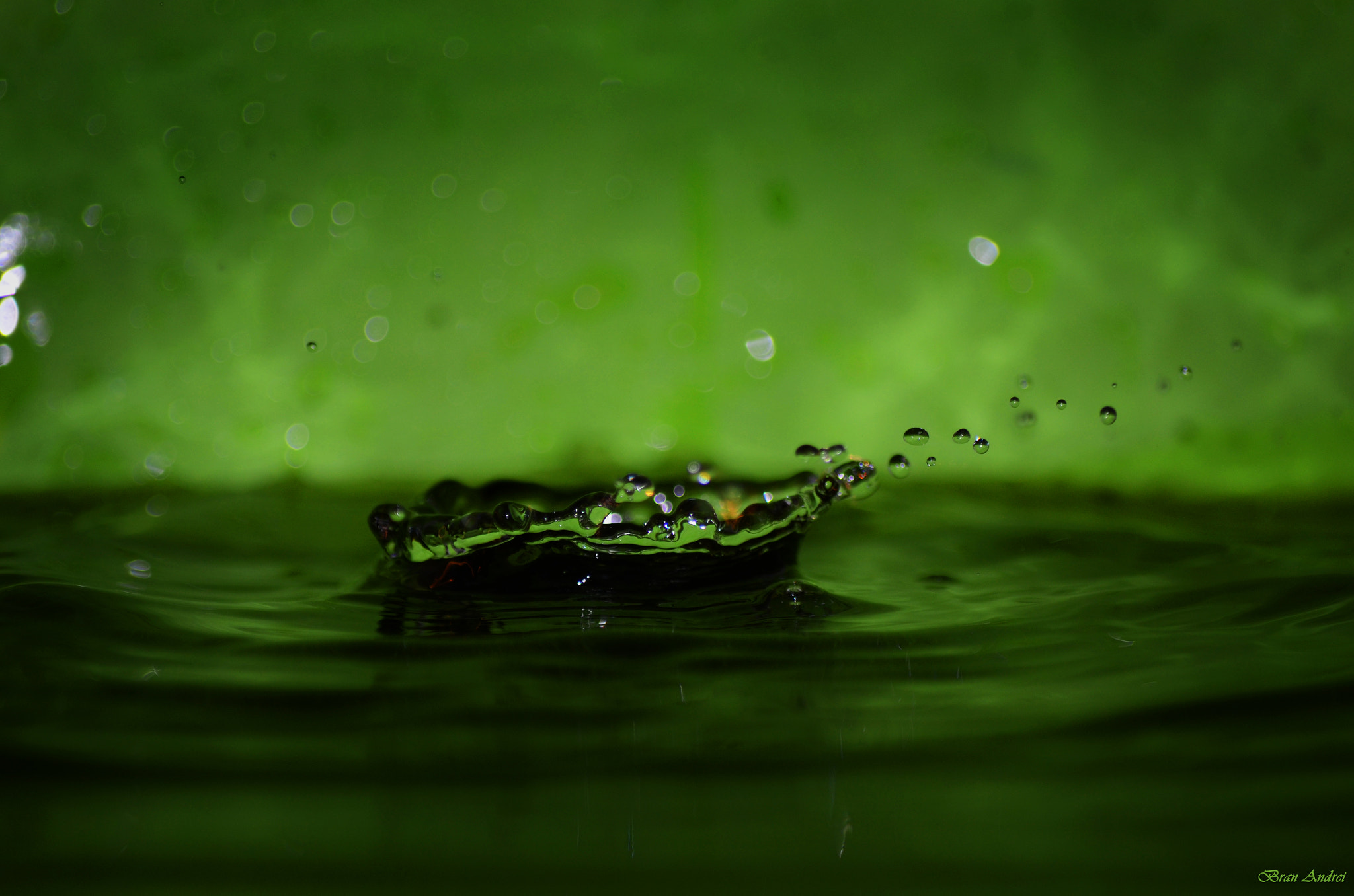 Photograph Green purity by Andrei Bran on 500px