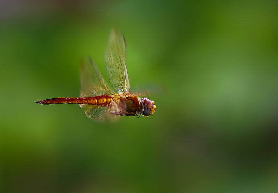 Photograph I am Flying by Vincentius Ferdinand on 500px