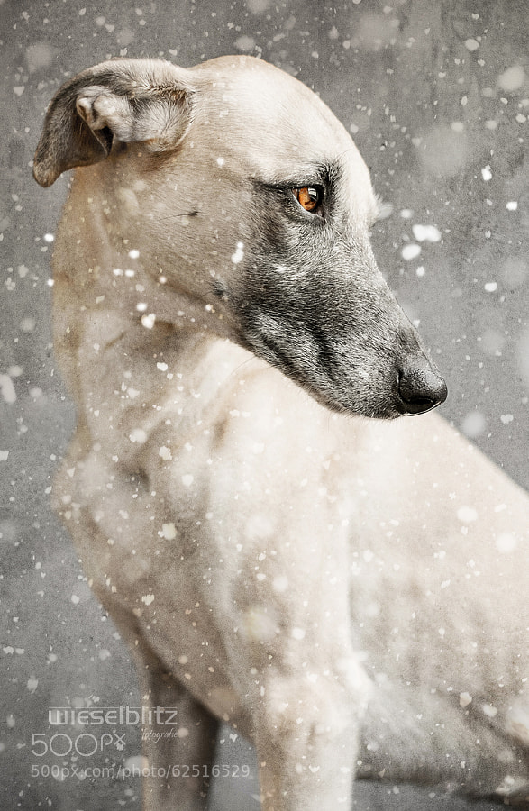 Photograph In the depth of winter by Elke Vogelsang on 500px