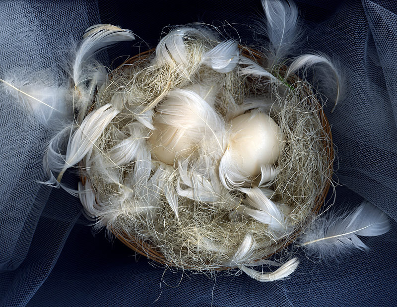 Photograph THE FULL NEST... by Magda Indigo on 500px