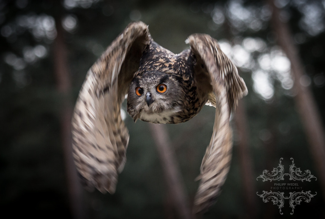 Photograph Art of Flight by Philipp Wedel on 500px