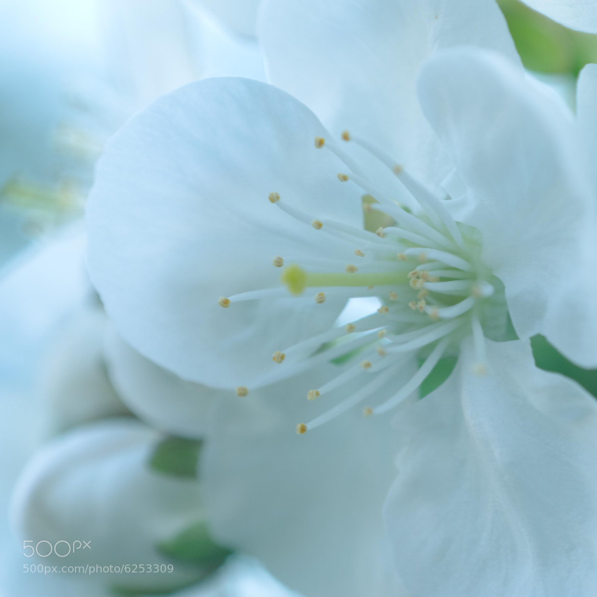 Photograph Cherry Blossom by Leonie Schoenmakers on 500px
