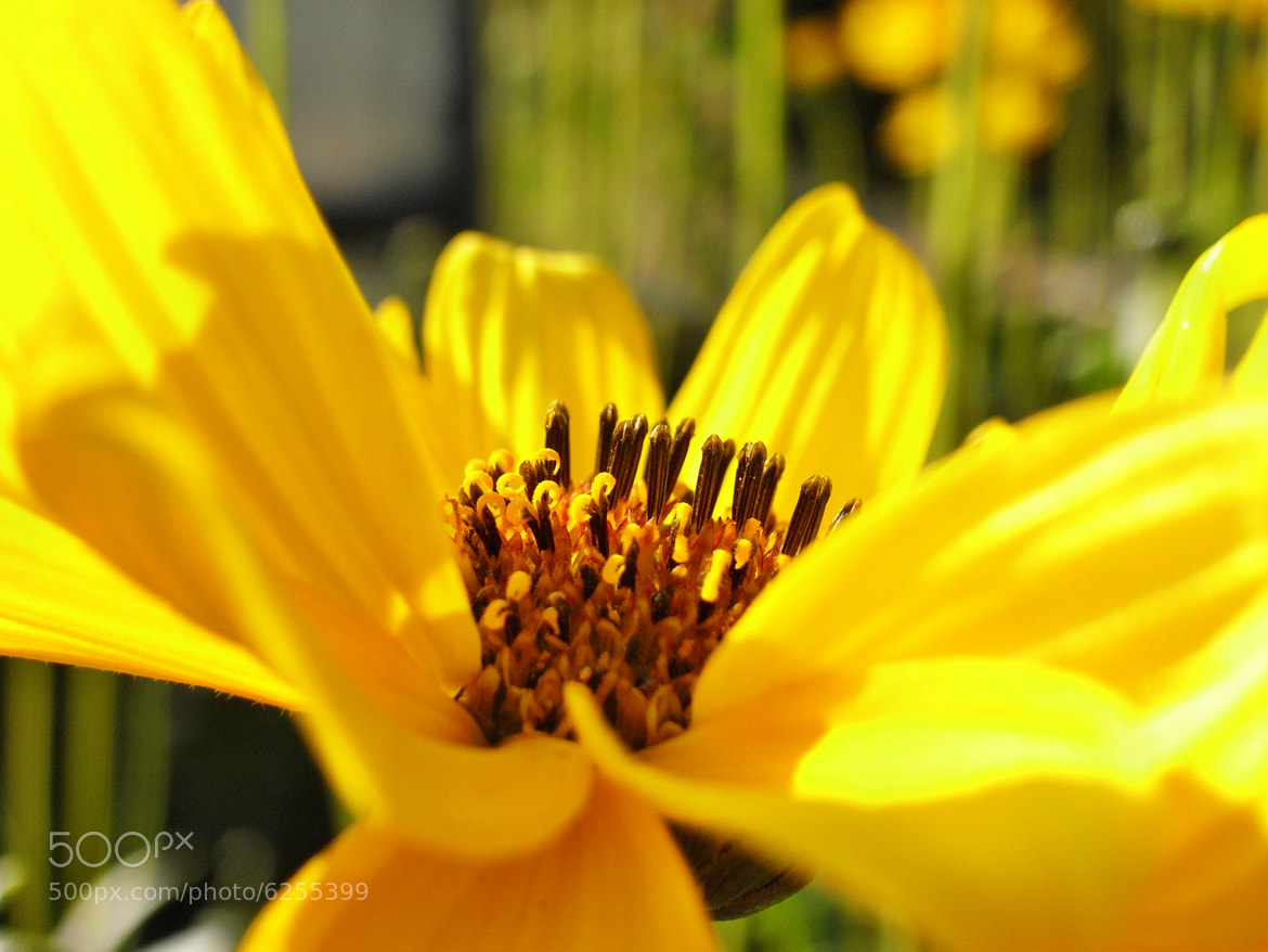 Photograph yellow by Roland Haßler on 500px
