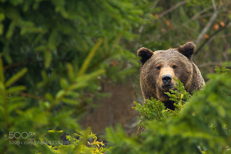 Photograph Big bear. by Marc Graf on 500px