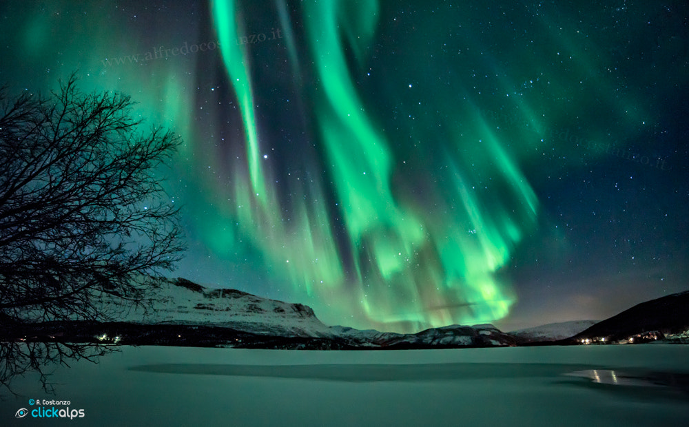 Photograph Northern Lights in Evenes by Alfredo Costanzo on 500px