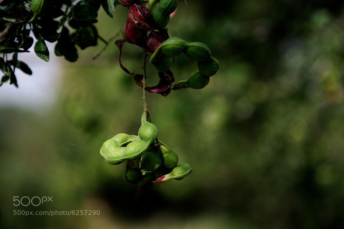 Photograph Peanut plant by Cristobal Garciaferro Rubio on 500px