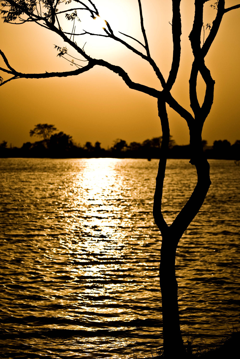 Photograph Tree by the lake by Sayu Sekhar on 500px