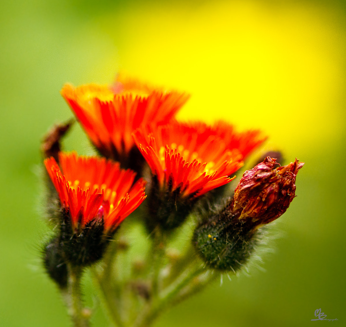 Photograph Art flowers by Mario Brouard on 500px