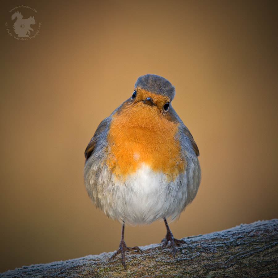 Photograph So I've gained a little weight… by Theo Vanden Wyngaert on 500px