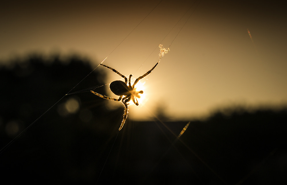 Photograph The magic hour with a spider by Salmen Bejaoui on 500px