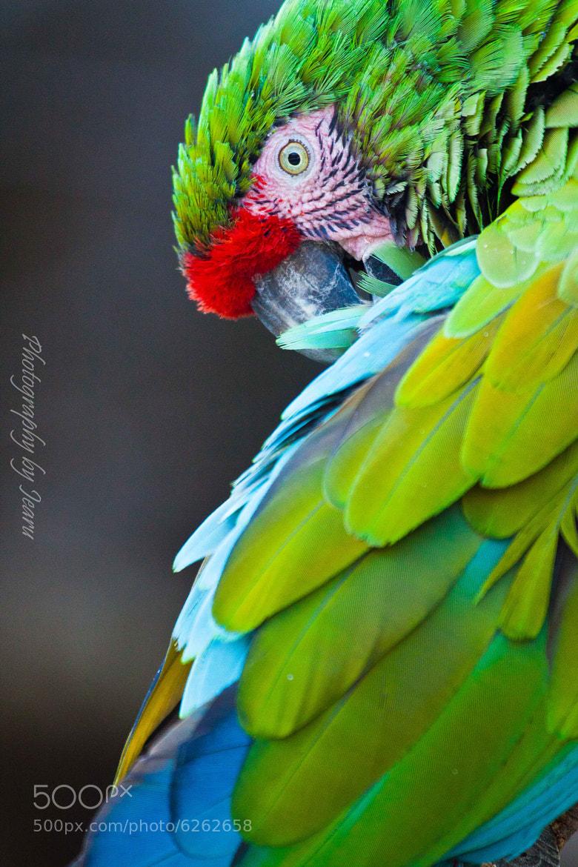 Photograph The parrot by Jeannette Rudloff on 500px