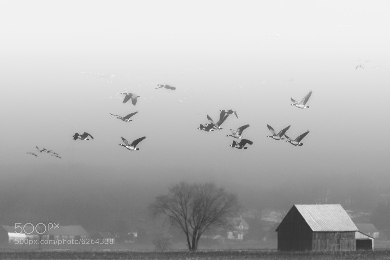 Photograph Vol sous la Grisaille by Renald Bourque on 500px