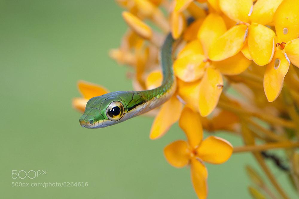Photograph Culebra by Luciano  Gallo on 500px
