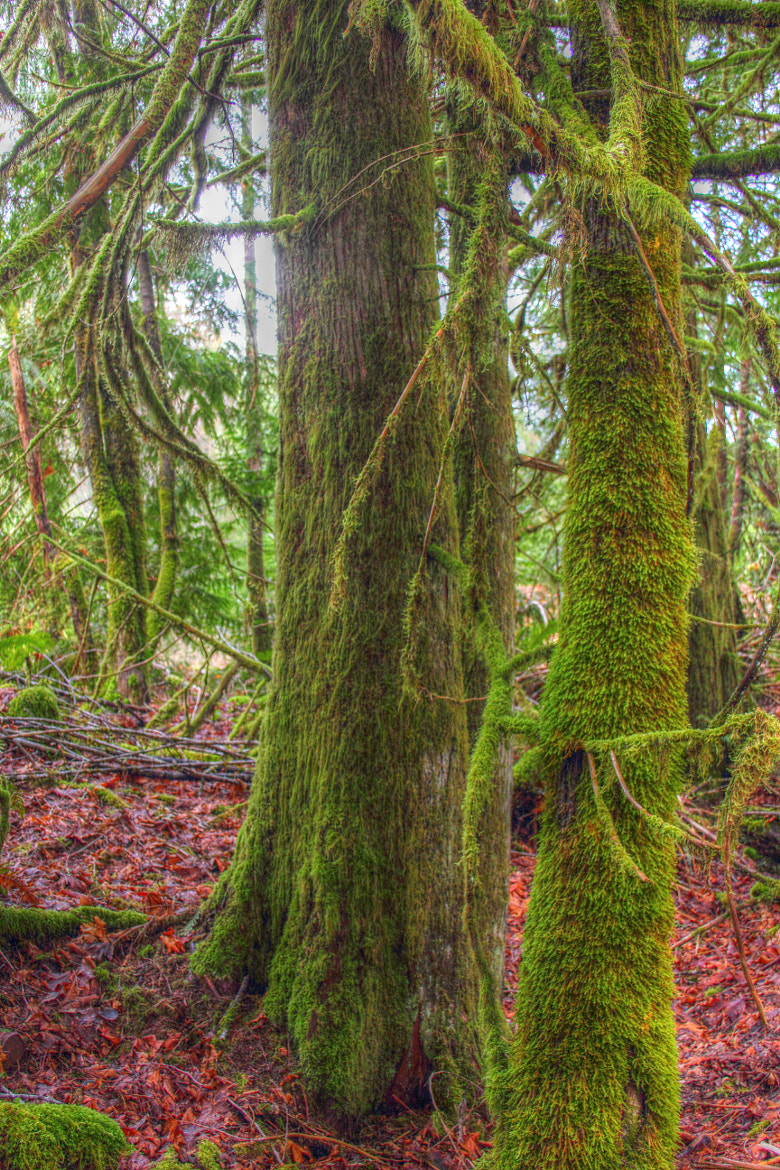 Photograph Mossy Trees HDR by Veritas Imagery NW on 500px