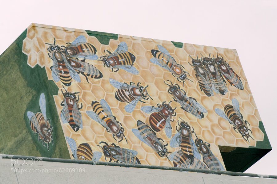 Bees painted on the top of a building in Downtown, Los Angeles.