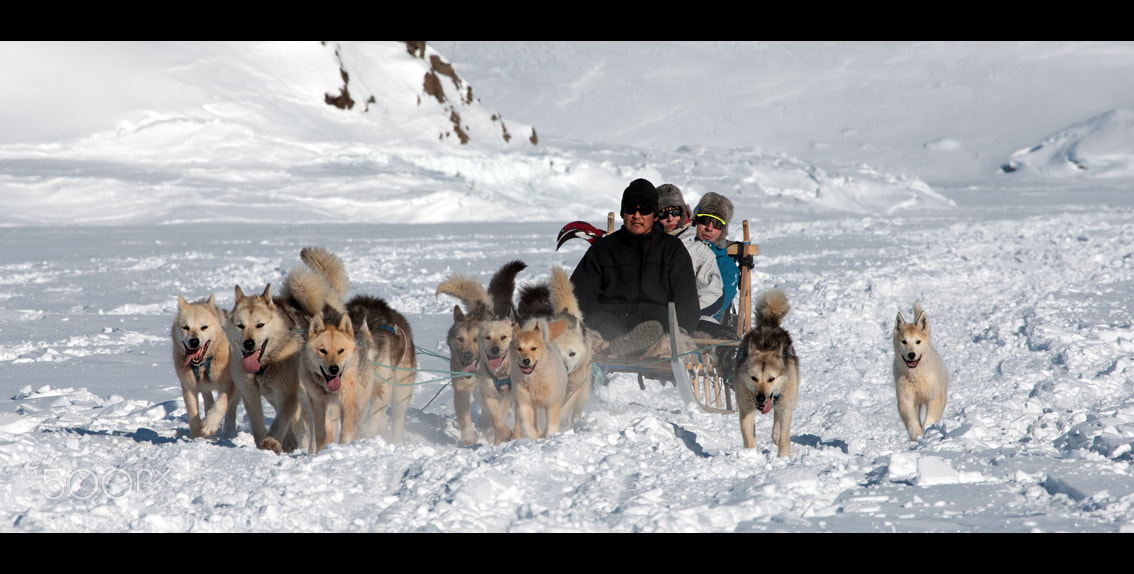 Photograph Greenland - Dogsled wild adventure by Moreno Bartoletti on 500px