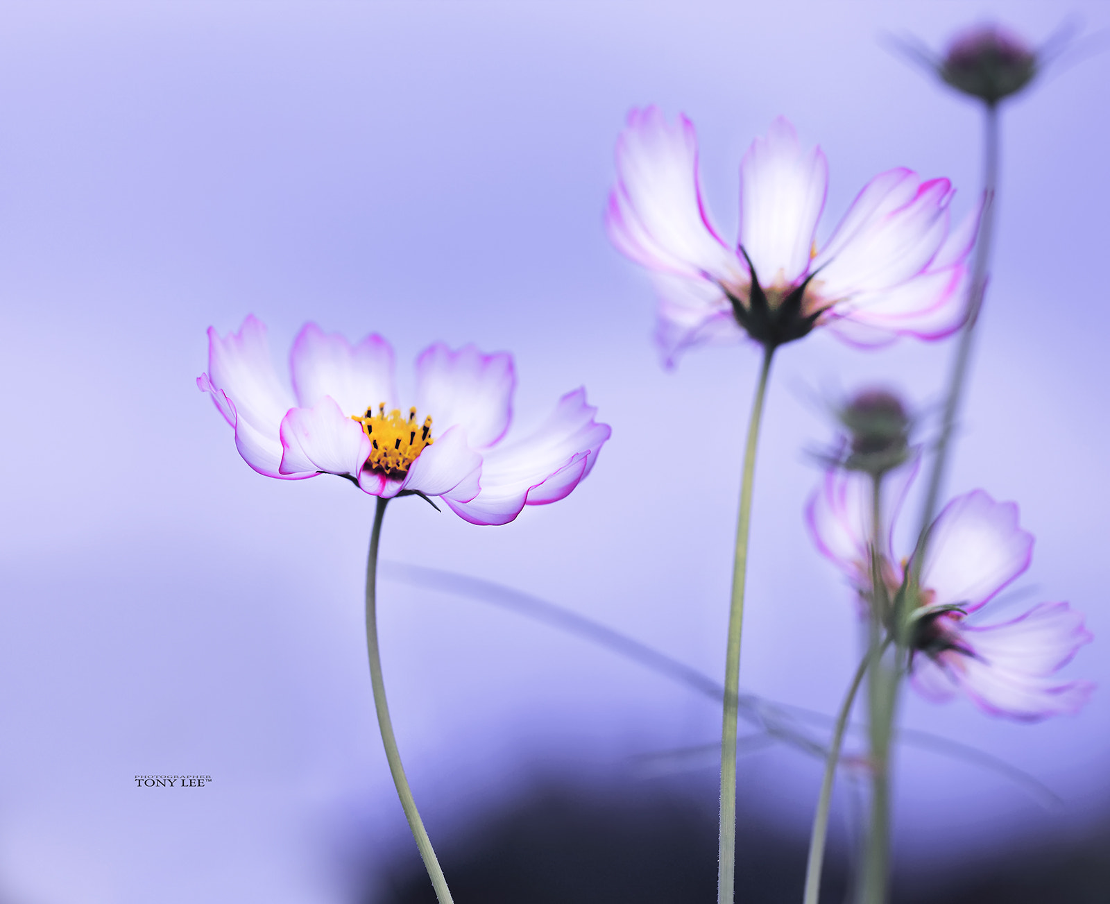 Photograph Cosmos by Tony Lee on 500px