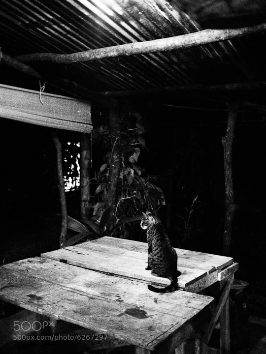 John Divita's cat at Jardin Escondido, Costa Rica