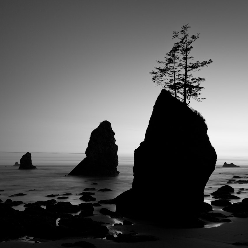 Photograph Two Trees by Jim Tanton on 500px