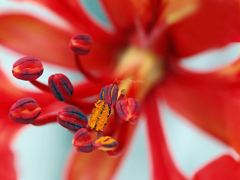 Photograph Carpel by Anan Suphap on 500px