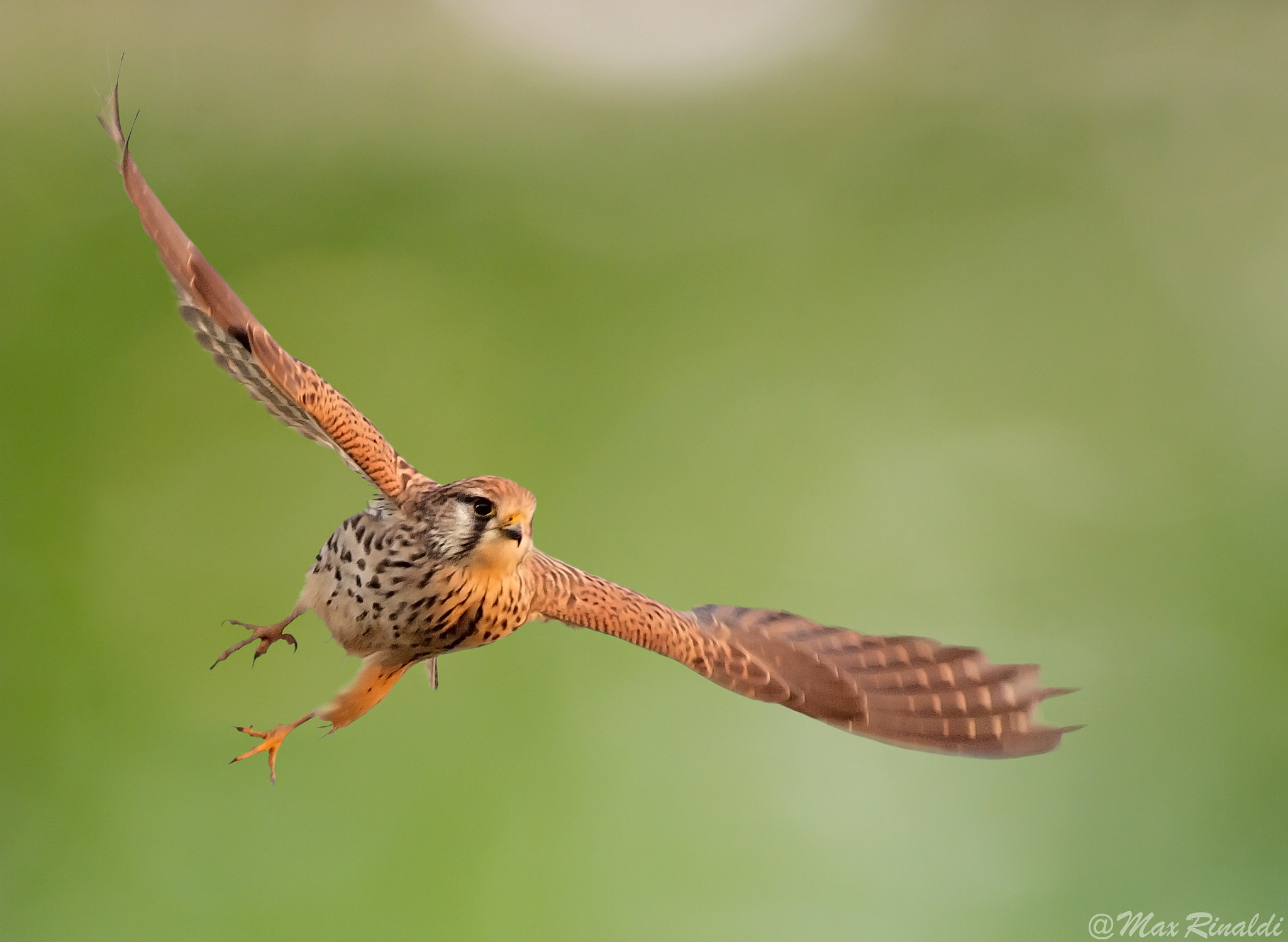 Photograph Ready to Fly by Max Rinaldi on 500px