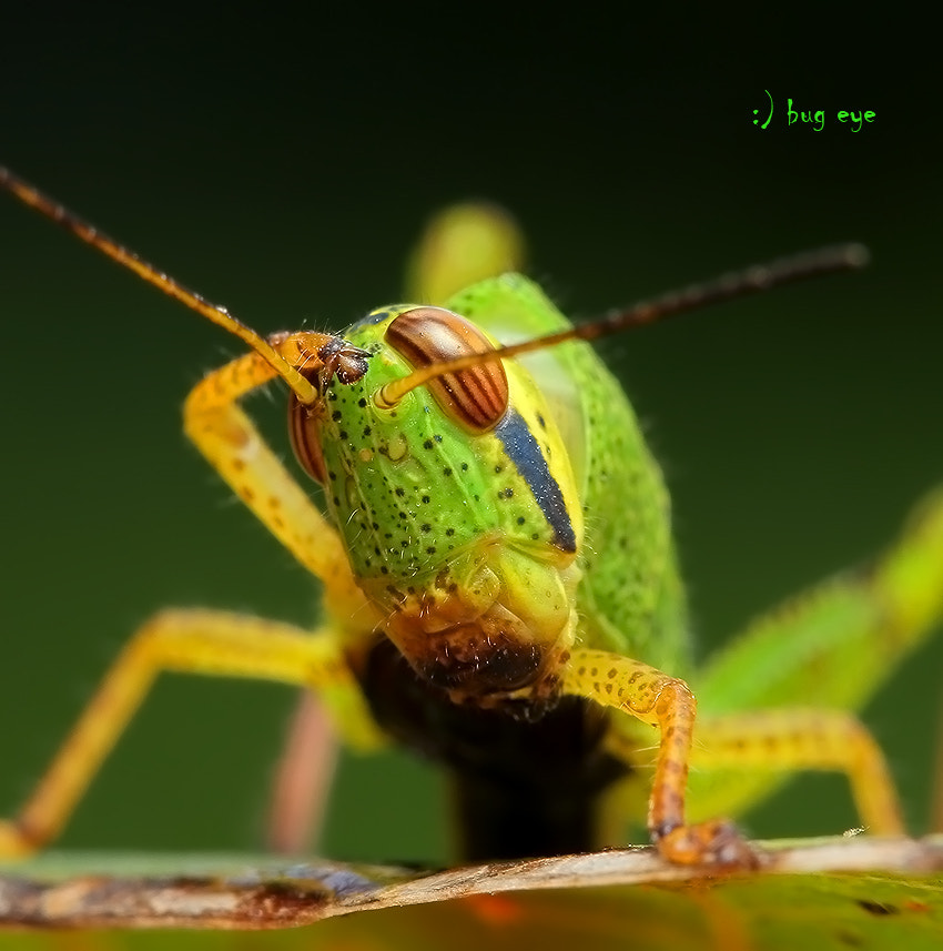Photograph saluter by bug eye :) on 500px