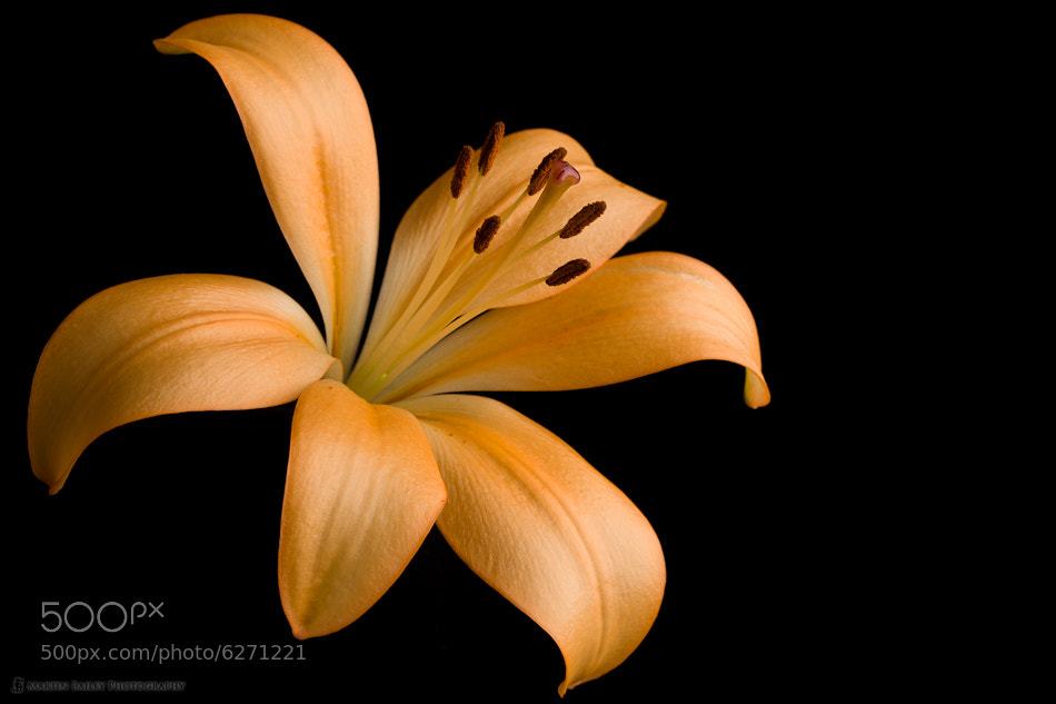Photograph Orange Lily by Martin Bailey on 500px