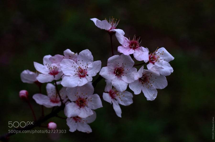 Photograph 2014 Spring by Mehmet Çoban on 500px