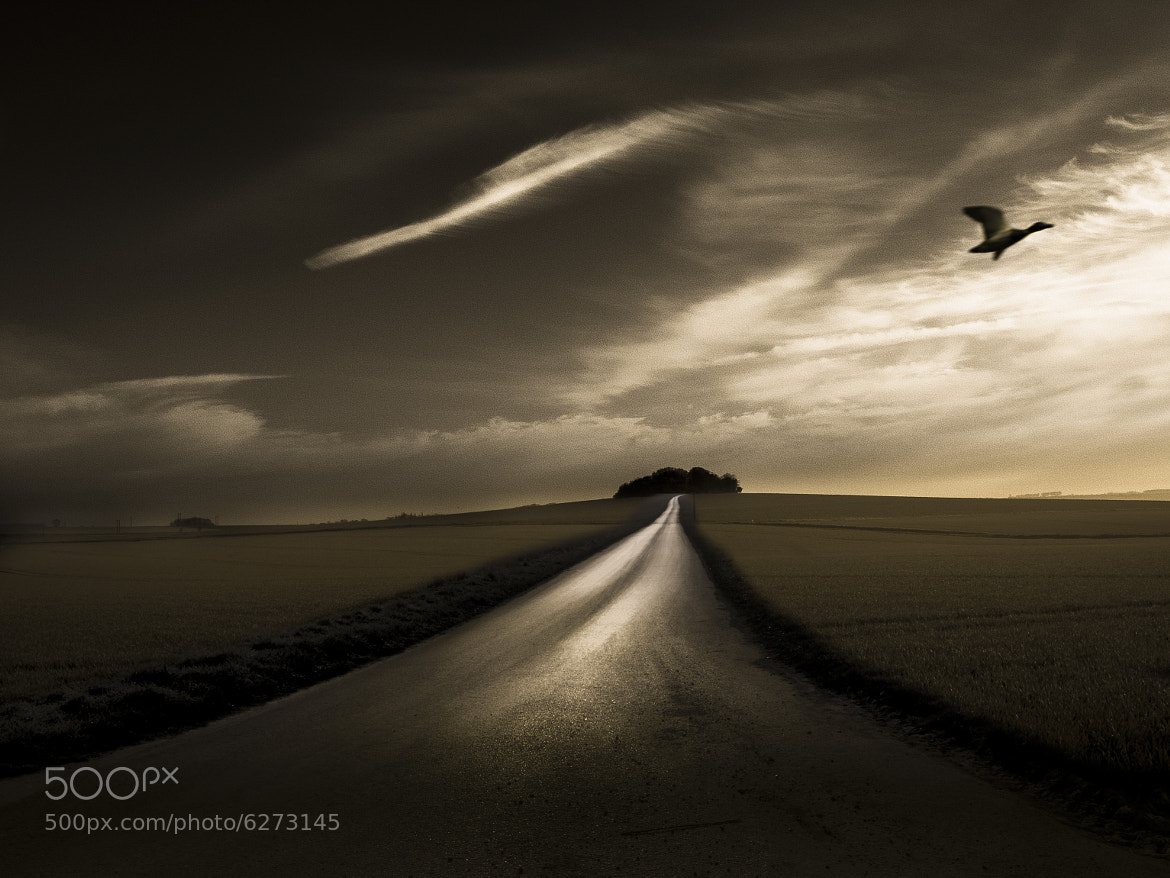 Photograph the flight of the duck by Jean-Claude Boucher on 500px