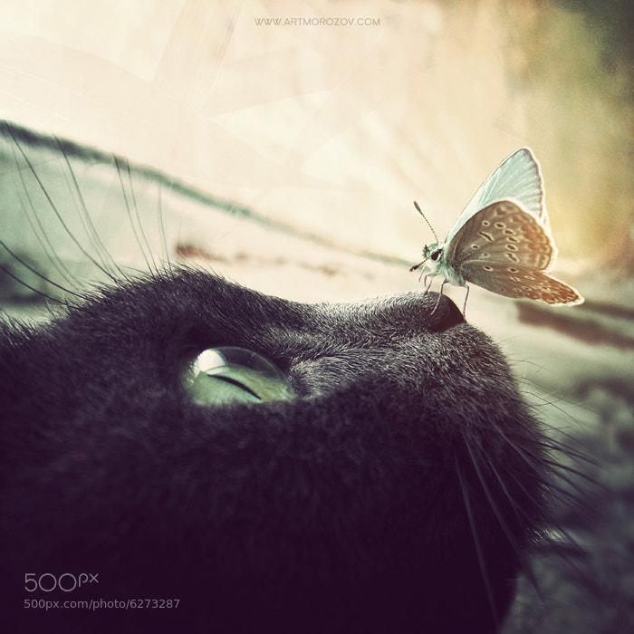 ****** by Anatoly Morozov on 500px.com