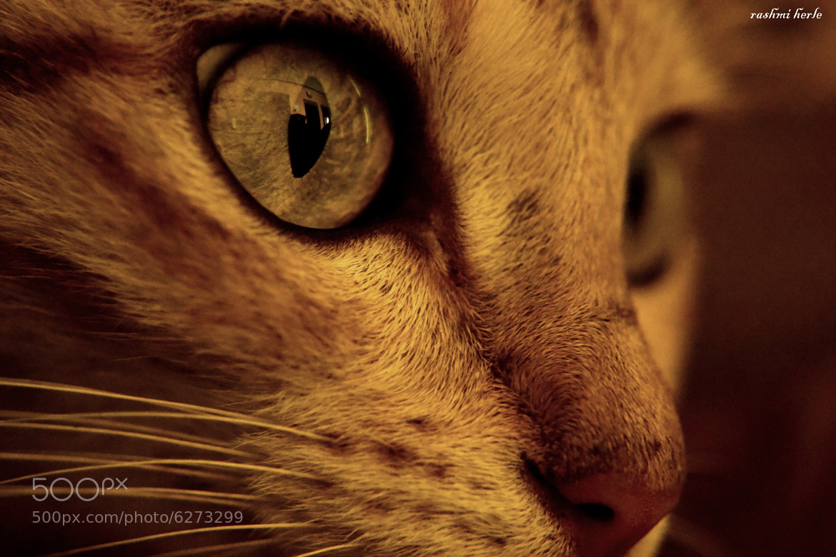 Photograph Untitled by Rashmi Herle on 500px