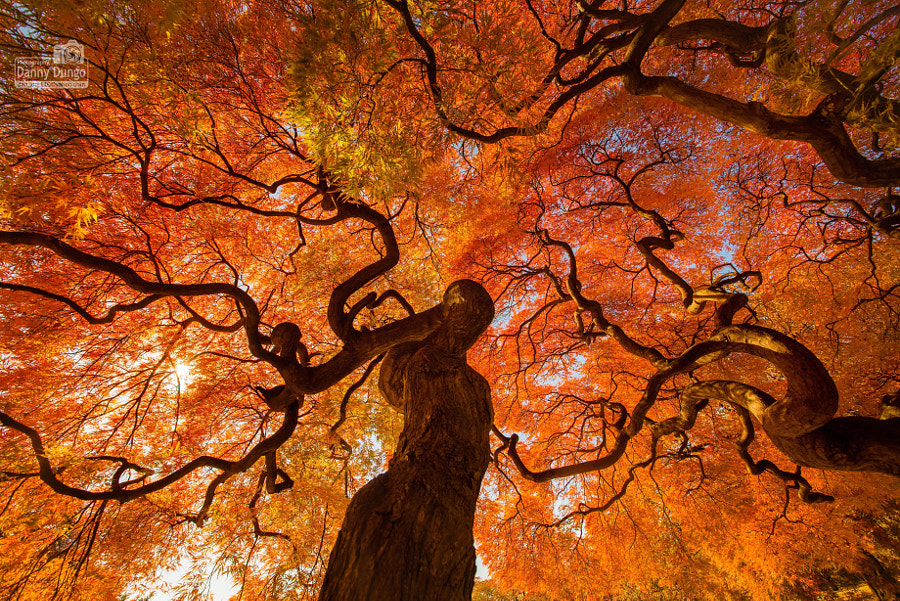 Autumn Tree by Danny Dungo on 500px.com