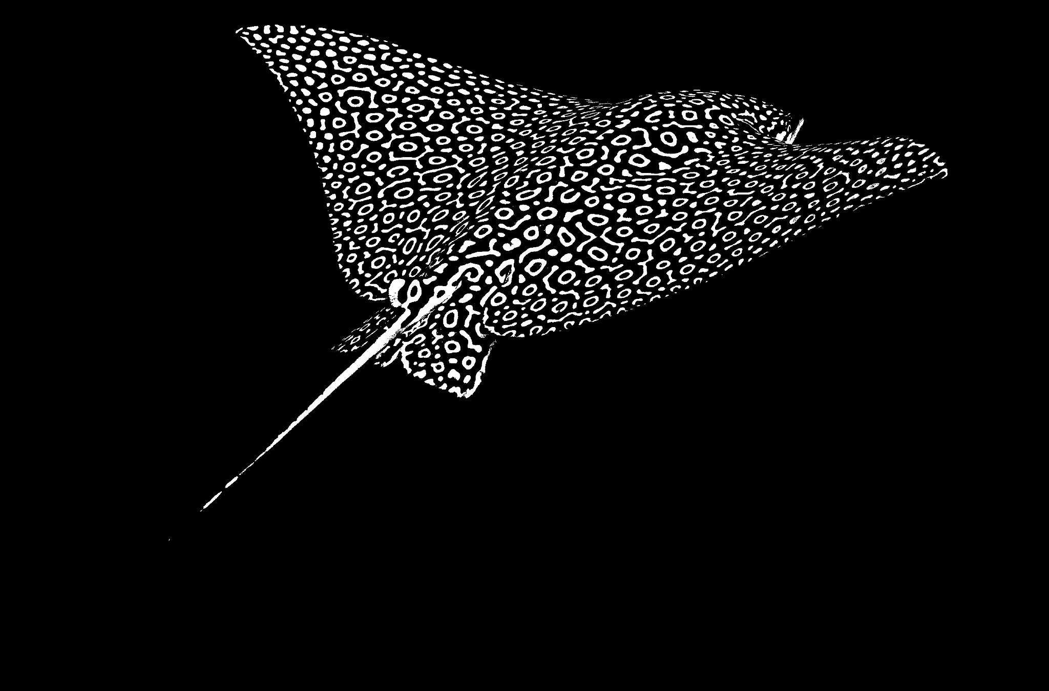 Photograph Eagle Ray by John Harrison on 500px