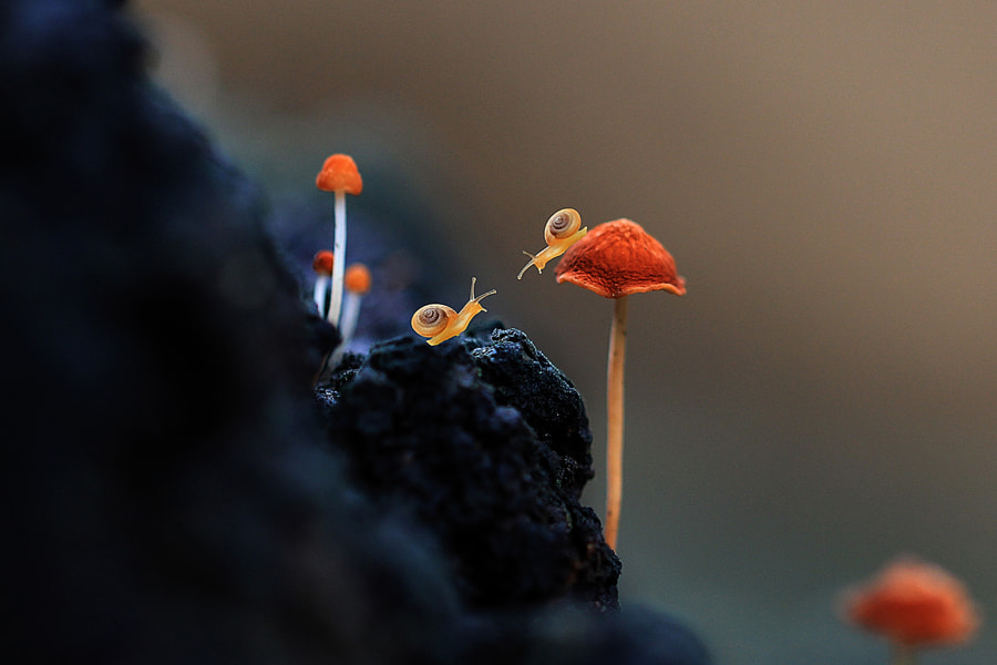Photograph Just you n me by Mang Day  on 500px
