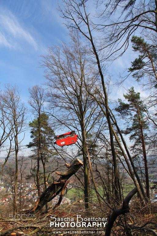 Photograph Tree Removal I by Sascha Böttcher on 500px