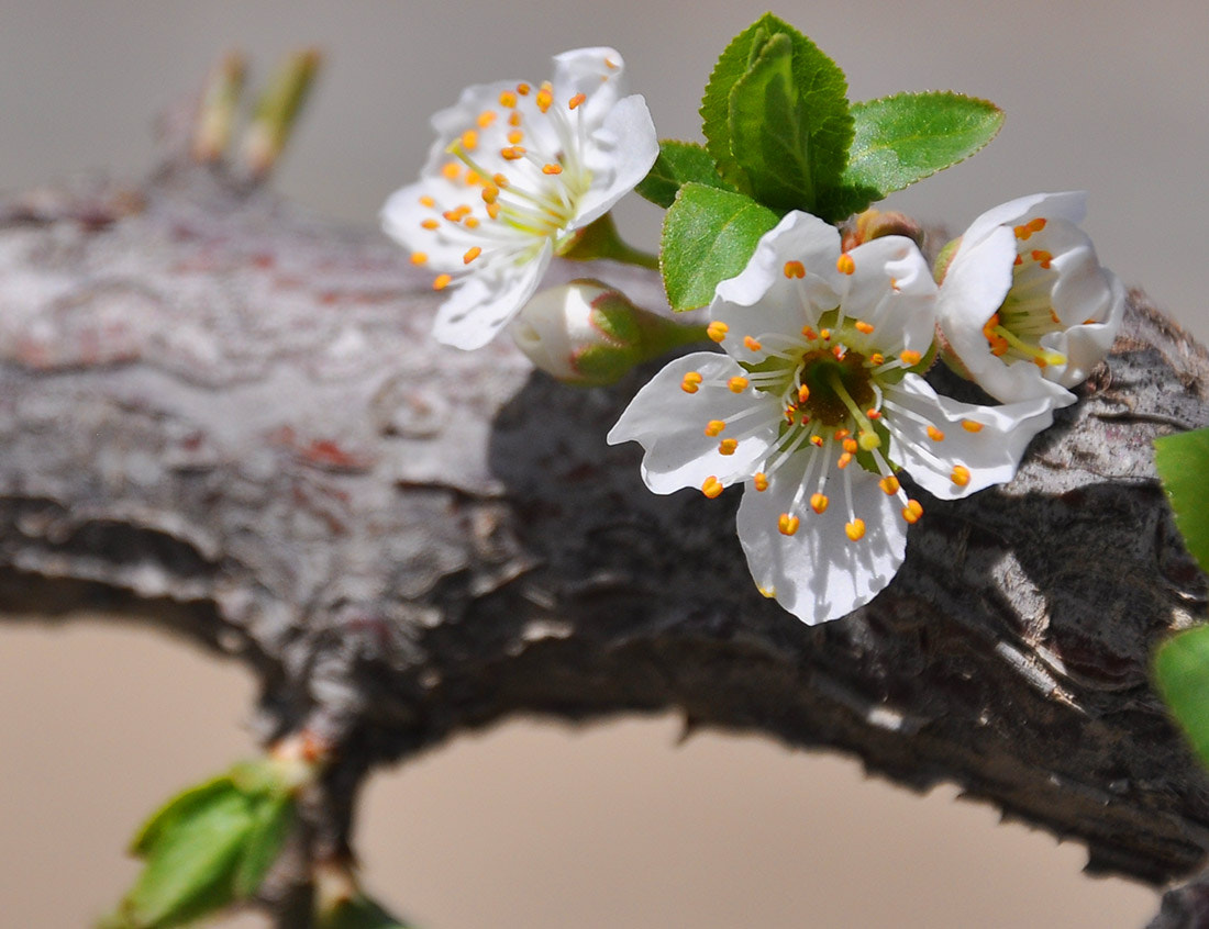Photograph spring03 by javad afzali on 500px