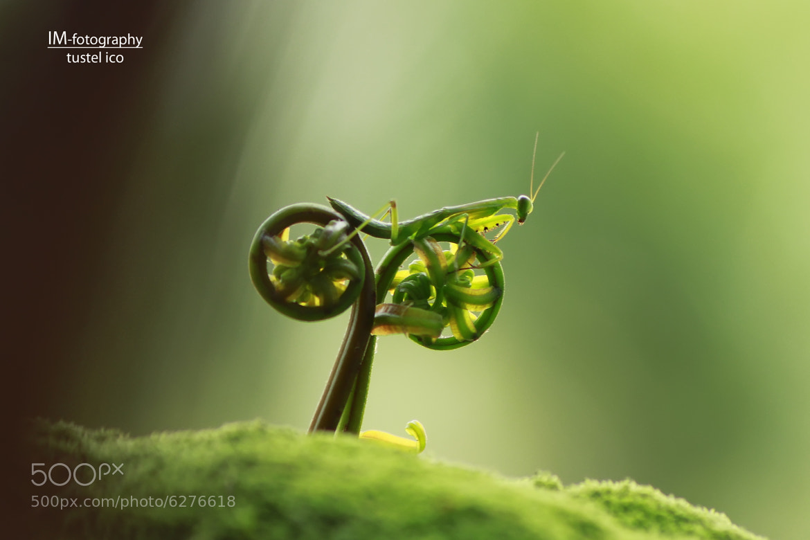Photograph rate my bike by tustel  ico on 500px