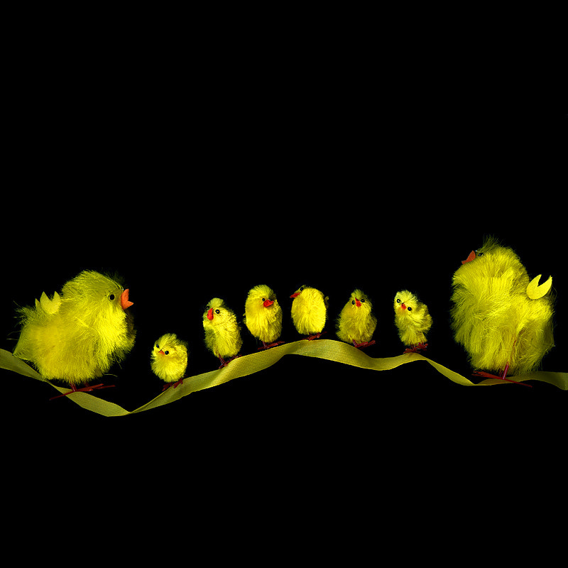 Photograph CHICKS ON A RIBBON... by Magda Indigo on 500px