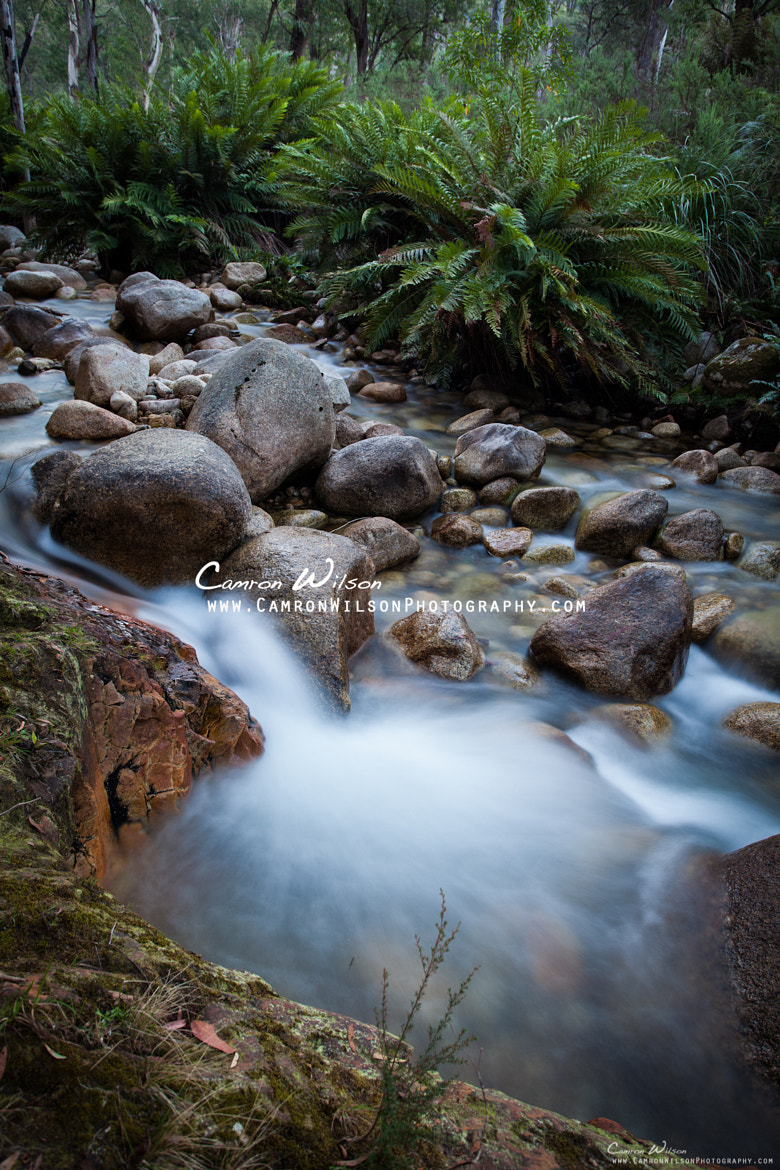 Photograph Mt Buffalo Stream by Camron Wilson on 500px