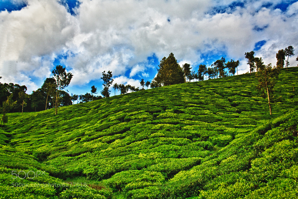 Photograph Greenscape by Vidhu S on 500px