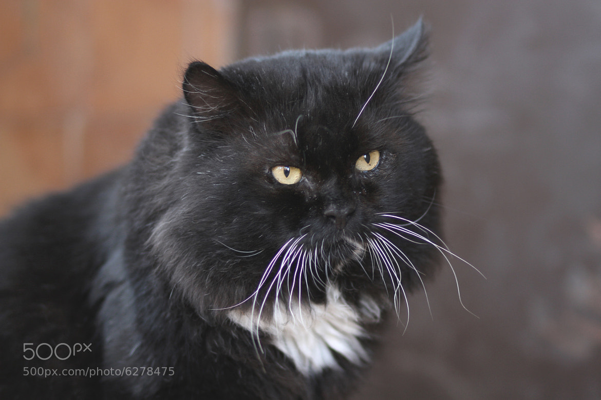 Photograph Felix the Cat by Alexey Shumeykin on 500px