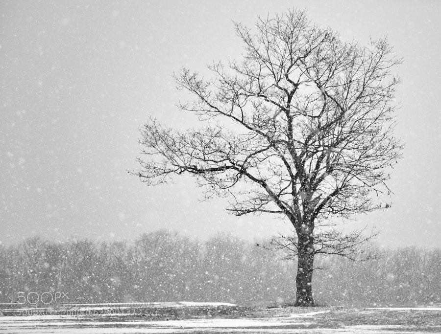 I enjoy this image for a couple of reasons:the first being the depth in the falling snow and the second being the isolation the snow flakes give the subject against the background. It makes for an almost 'pointalistic' image...