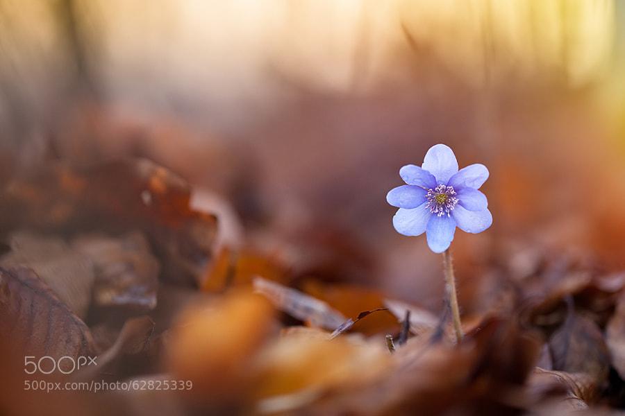 Photograph Spring by Tomasz Wieczorek on 500px