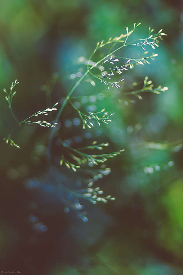 Grass in the Dark