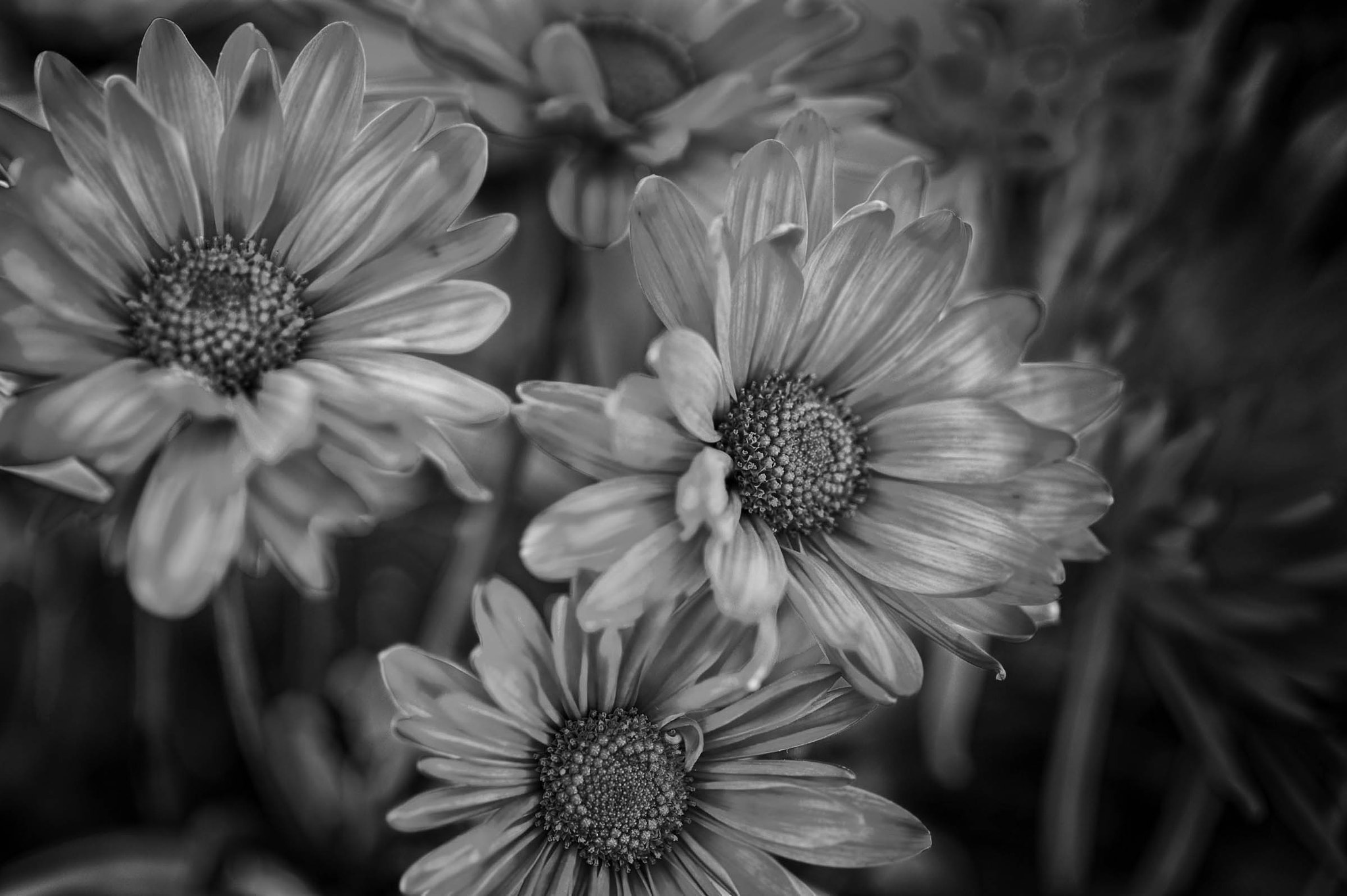 Photograph HDR – Purple in Beautiful Black and White by Mark Neal on 500px