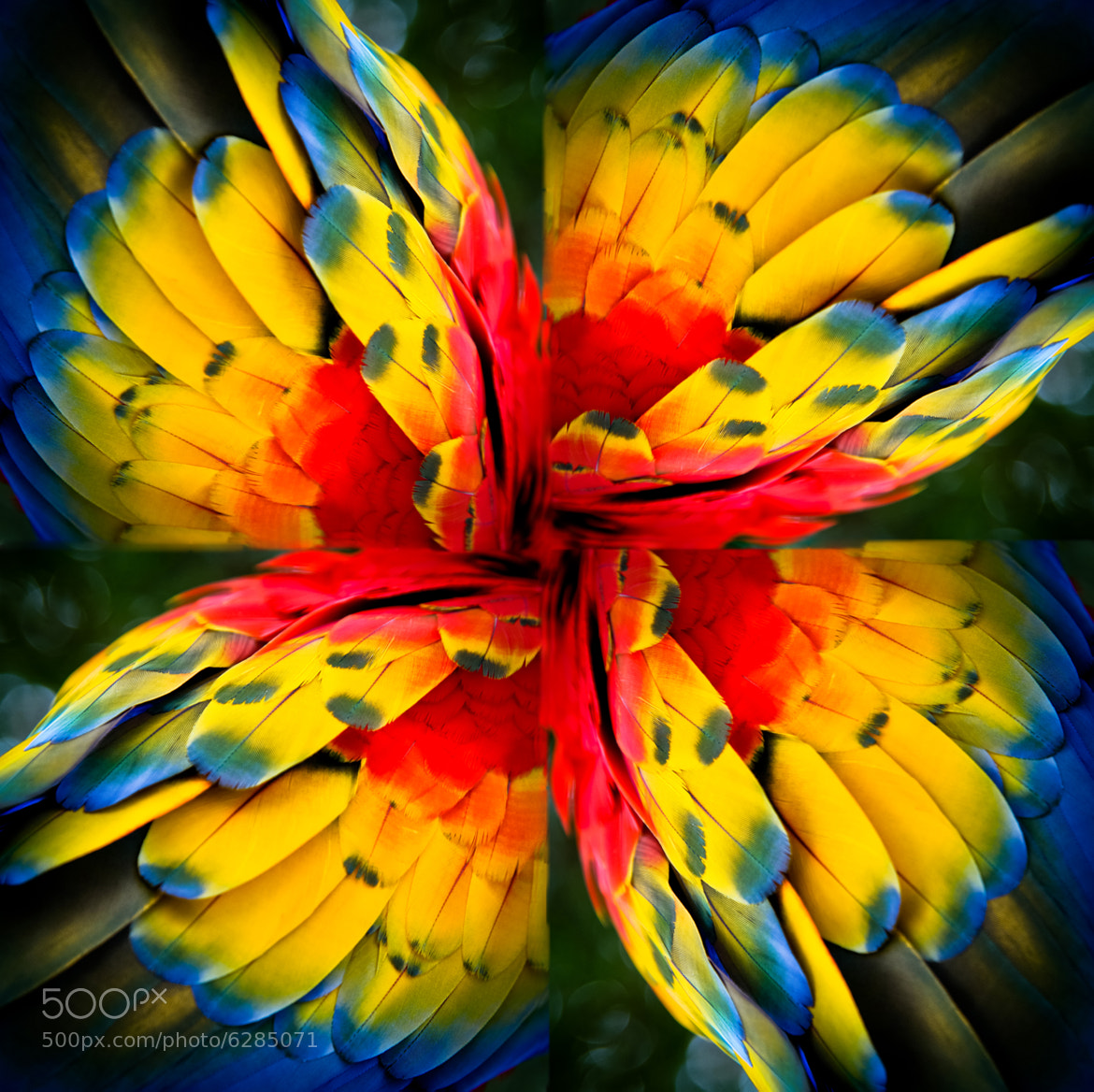 Photograph red mexican guacamaya flower by Enrique Olvera on 500px