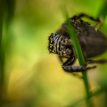 Jumping Spider 4.