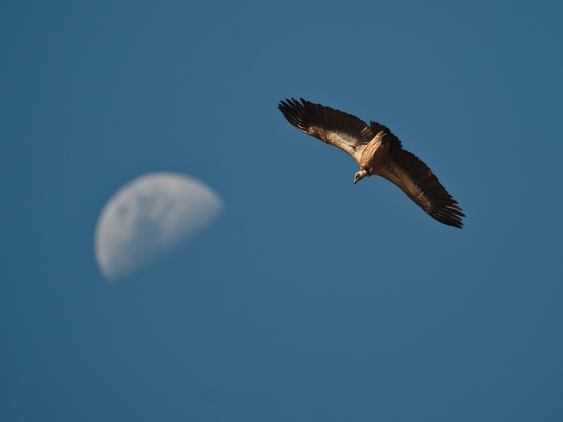 Photograph Fly me to the moon by Gorazd Golob on 500px
